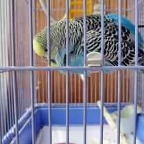 Обитатель веранды - ручной, говорящий попугай Миша