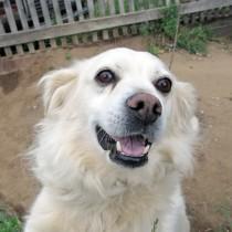 Двор гостевого дома охраняет пес Белый