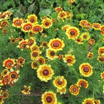 Двор гостевого дома - цветы