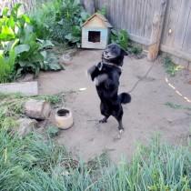Во дворе гостевого дома - пес Черный
