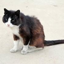 кот Том охраняет двор от не прошенных собак